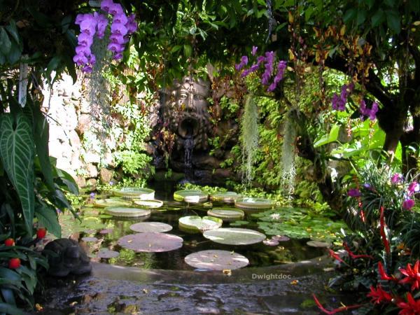 giardino botanico ischia immagini